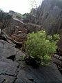 Скелі МоДРу - 14.jpg