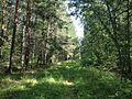 Старый Сибирский тракт - panoramio (13).jpg