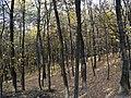 Украина, Киев - Голосеевский лес 64.jpg