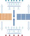 Формирование двудольной миварной сети.png