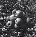 בית אורן - תפוחי עץ, תוצרת בית אורן.-JNF032301.jpeg