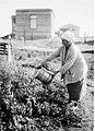 גבעתיים - אשה זקנה בעבודת הגן.-JNF043145.jpeg