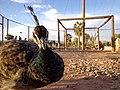 منتزه ثالت مارس 6 الرشيدية، المغرب.JPG