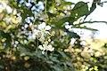 লাউয়াছড়া জাতীয় উদ্যান 05.jpg