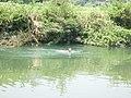 上灰溪河里 - panoramio.jpg