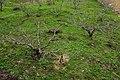 梅園 Plum Garden - panoramio.jpg
