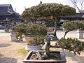 盆景博物馆景色 - panoramio - 江上清风1961 (15).jpg