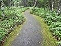 苔のみち(The moss road) - panoramio.jpg