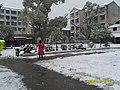 雪地小道 - panoramio.jpg