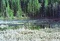 02-06-17, swamp - panoramio.jpg