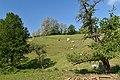 03 0116 Magerrasen von Gronau mit angrenzenden Flächen.jpg