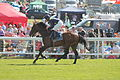 042 Epsom Derby 2015 - Storm the Stars and Pat Cosgrave going to post (18562500696).jpg