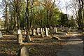 1481viki Cmentarz żydowski przy ul. Lotniczej. Foto Barbara Maliszewska.jpg