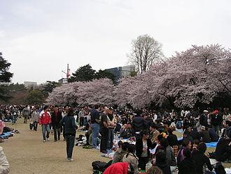 Sendagaya - 2006 Hanami in Shinjuku Gyoen 2006