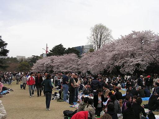 2006 Hanami at Gyoen