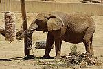 2012-06-09 Oakland Zoo 055 (7439967310).jpg
