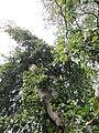 20121016Friedhof St Johann6.jpg