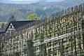 2014-04-17 14-43-20 Switzerland Kanton Schaffhausen Dörflingen Dörflingen.JPG
