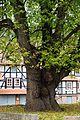 2015-10-24 Dorflinde in Neuenstein-Aua (Hessen) 02.jpg
