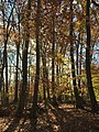 2015-11-15 09 55 21 Late autumn foliage in the woodlands along the West Branch Shabakunk Creek in Ewing, New Jersey.jpg