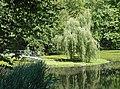 20150628015DR Heynitz (Nossen) Schloßpark Teich.jpg