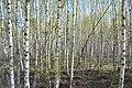 2015 25 Национальный парк Мещёрский.jpg
