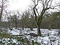 20170125 Wolfheze Wodanseiken16b.jpg