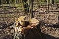 20200401Rodenhofer Schwarzwald 06.jpg