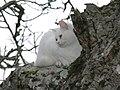 2Gato Cat113.JPG