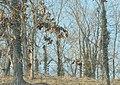 500px photo (185872031).jpeg