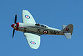71 TMK Sea Fury N71GB Sawbones 2014 gold photo D Ramey Logan.jpg