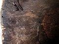 9541 8012525f inside Detail Igala Helmet mask, Nigeria (7688650370).jpg
