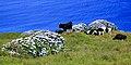 Açores 2010-07-19 (5055064330).jpg