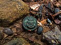 A Royal Naval Button Discovered on the Foreshore near Ringmore, Devon.jpg