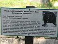 A Silesian Zoological Garden abrah 39.JPG
