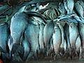 A close-up of fish10.JPG