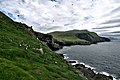 A colony of puffins in Mykines (2).jpg