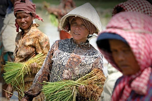 Agriculture in Laos - Laotian women planting rice seedlings near Sekong.