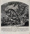 A pack of dogs is falling head over heels in their pursuit o Wellcome V0021078.jpg