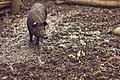 A pig and a butterfly at the Booker T. Washington National Monument (41686166).jpg