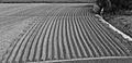 Aardappelveld onder aan de dijk (binnendijks). Locatie, Noarderleech 02.jpg