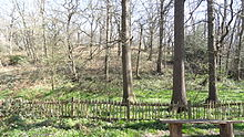 Abbey Wood SSSI.JPG
