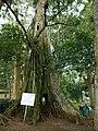 Aburi garden 3.jpg