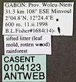 Acropyga bakwele casent0104123 label 1.jpg