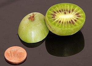Actinidia arguta fruit - hardy kiwi