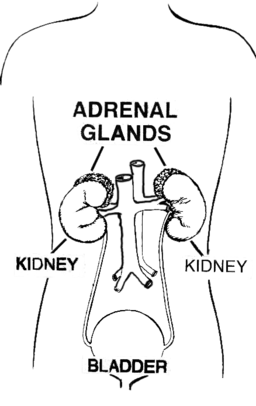 Adrenal gland (PSF)