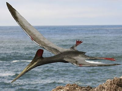 Pterodactylus antiquus, reconstruction.