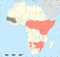 Africa land cover location mamba map with borders.jpg