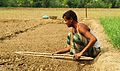 Agriculture in Bangladesh 9.JPG