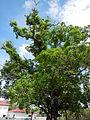 AguinaldoShrinejf0944 07.JPG